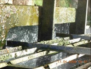Algas en la torre de enfriamiento